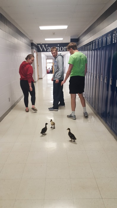 Ducks following students